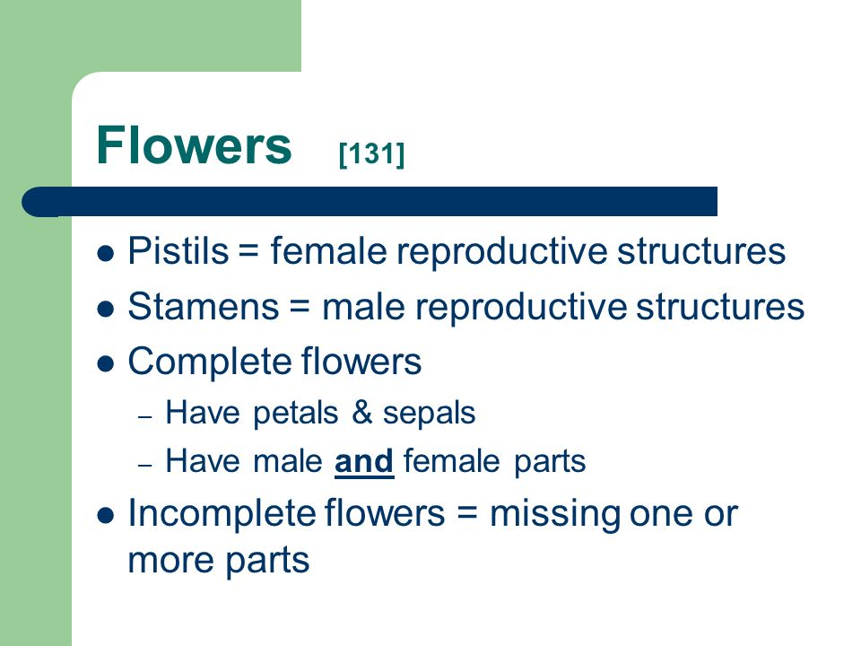 Flowers [131] Pistils = female reproductive structures